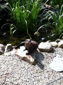 SMNC river otter