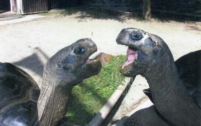 Turtle Musical Throwdown