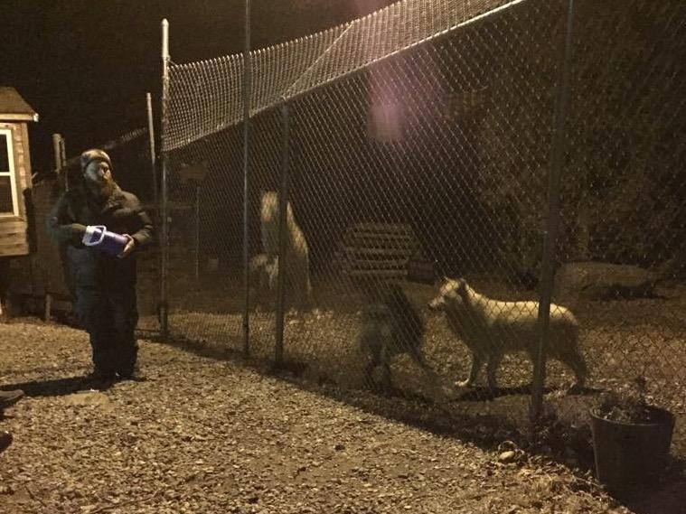 south salem wolf conservation center